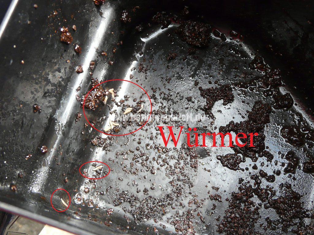 Melitta mit Würmer (3)